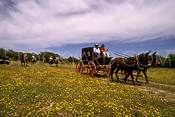 Wagon Ride through feilds of wildflowers