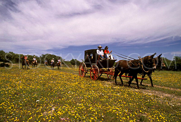 Wagon Ride through feilds of wildflowers