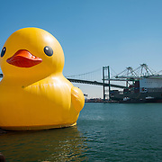 Floating 61 Foot Duck