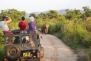 Elephant safari in Hurulu Eco Park biosphere reserve, Habarana, Anuradhapura District, Sri Lanka, Asia