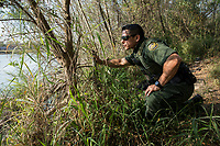 A border patrol agent looks across the Rio Grande river, in Roma, TX, on the U.S.-Mexico border, on February 2, 2017 (Photo/Scott Dalton)