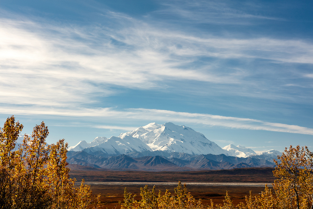 Denali framed by trees in late autumn in Denali National Park in Interior Alaska. Afternoon.