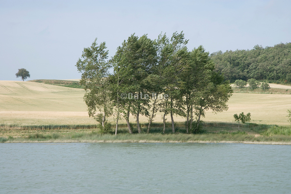 group of trees at the edge of a small lake France Languedoc