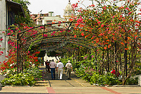 People walking under an arbor of Bougainvillea (flowering plants) on the Paseo de Las Bovedas, Casco Viejo (Old City), San Felipe, Panama City, Panama