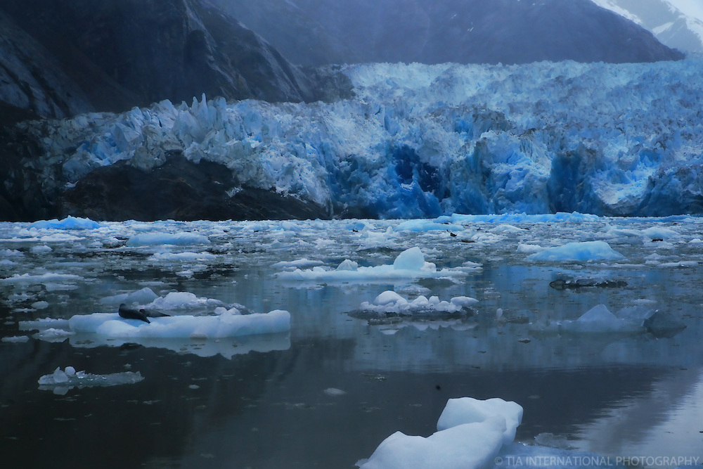 Icebergs at South Sawyer Glacier
