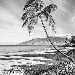 Maui curved bent palm tree black and white photo at Kamaole Beach Park with Maalaea Bay in Wailiea Kihei Hawaii in the Hawaiian Islands. Copyright ⓒ 2019 Paul Velgos with All Rights Reserved.