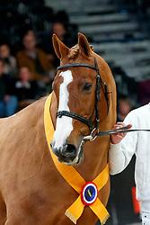 Tangelo van de Zuuthoeve<br /> KWPN Stallionshow - 's Hertogenbosch 2018<br /> © Hippo Foto - Dirk Caremans<br /> 01/02/2018