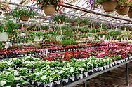 The Glass Greenhouse and Farm Market, Jamesport, NY