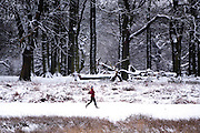 © Licensed to London News Pictures. 03/02/2015. Richmond, UK. A woman jogs through the snow.  Deer in snow in Richmond Park, South West London today 3rd February 2015. Snow fell across the London area overnight . Photo credit : Stephen Simpson/LNP