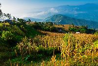 Near Bageshwori, Kathmandu Valley, Nepal.
