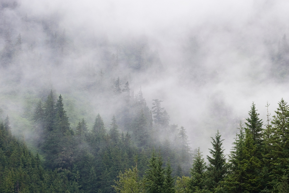 Low fog moves in on a forest of spruce and hemlock trees near the Mendenhall Visitor Center.