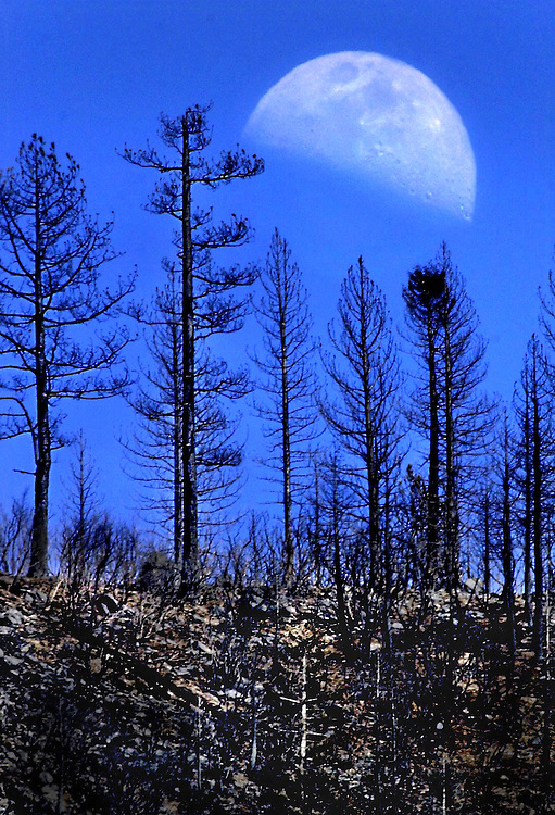 The moon rises over a burned area of forest near the town of Floriston, CA. Which came close to burning.