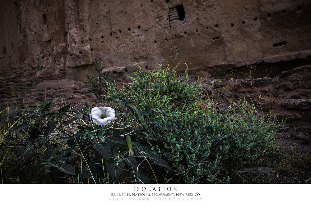 20x30 poster print of a white wildflower and cliff dwellings.