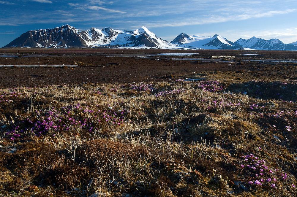 Prins Karls Forland<br /> Svalbard<br /> Norway