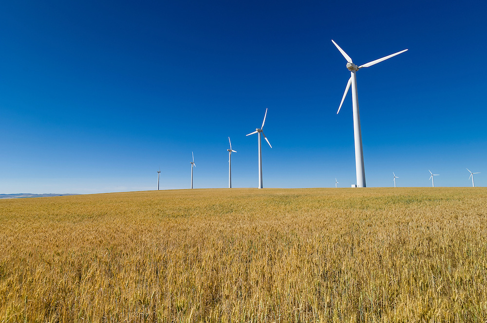Electricity-generating wind turbines in wheat field near Condon, Oregon.