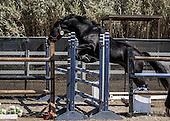 Horse No 55