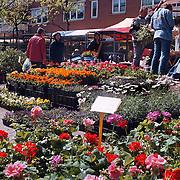Geraniummarkt 1999 Oostermeent