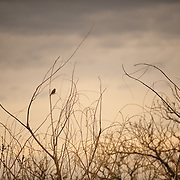 Bird at Sunset. Jerome, Arizona, USA