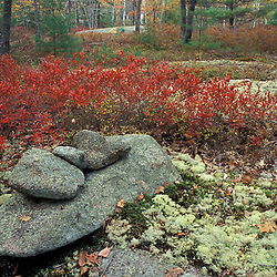 Kennebunkport, Maine.  Rocks, lichens, and blueberry bushes in an oak-pine forest on the Steele Farm. Fall Foliage.