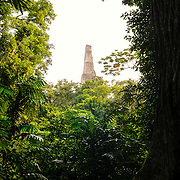 The top of Temple V is framed by the thick jungle in the Tikal Maya ruins in northern Guatemala, now enclosed in the Tikal National Park.
