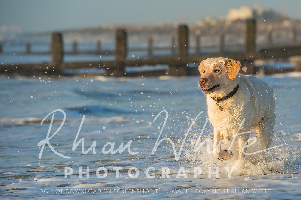 Images of Bailey the Labrador at Lancing beach.