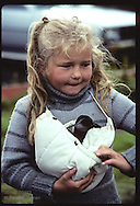 Girl carries puffin chick, rescued night before, in nylon hood to release it at shore;Westmann Is* Iceland