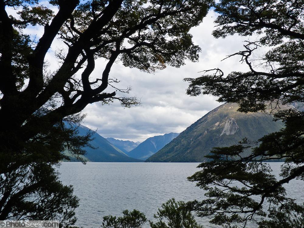 Beech forest and Lake Rotoiti, Nelson Lakes National Park, South Island, New Zealand