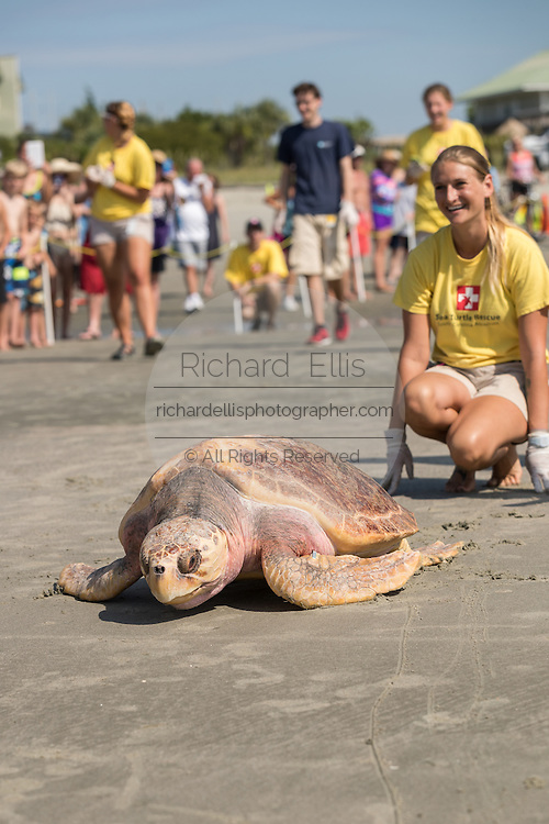 Watched by a marine biologist, Lady, a rehabilitated loggerhead sea turtle crawls back into the Atlantic Ocean during a release June 30, 2016 in Isle of Palms, South Carolina. The turtle was found severely emaciated and spent a year in rehabilitation at the South Carolina Aquarium sea turtle hospital in Charleston.