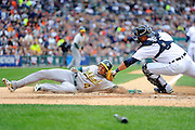 DETROIT, MI - OCTOBER 07: Coco Crisp #4 of the Oakland Athletics is tagged out at home by catcher Gerald Laird #9 of the Detroit Tigers in the top of the third inning during Game Two of the American League Division Series at Comerica Park on October 7, 2012 in Detroit, Michigan. (Photo by Jason Miller/Getty Images)