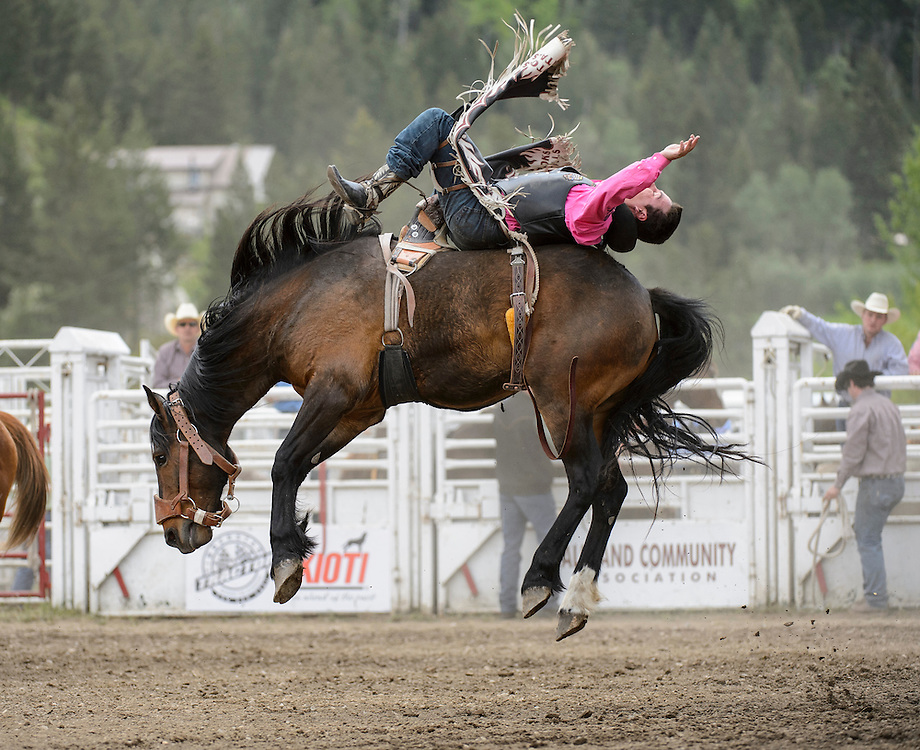 A cowboy competing in the bronco riding competition at the Falkland Stampede.
