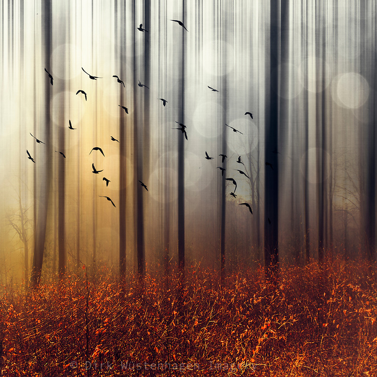 Abstraction of a forest at sunrise with a flock of birds - manipulated photograph