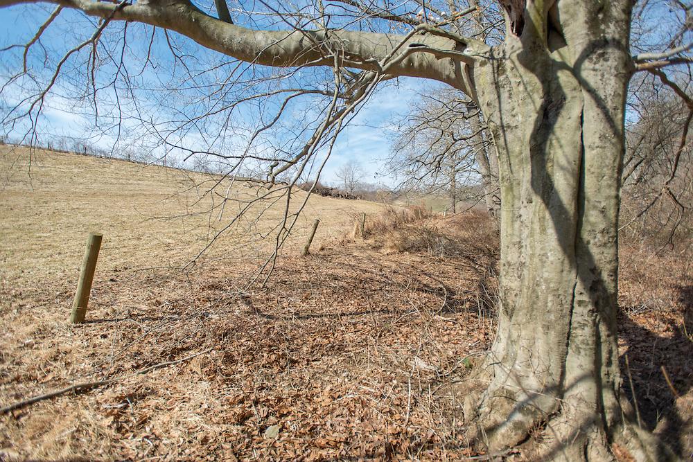 Tree near fenced pasture near Street, Maryland