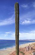 Cactus, Cabo San Lucas, Baja California, Mexico<br />