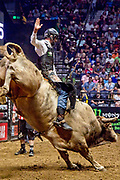 Colten Jesse riding bull during the 25th Professional Bull Riders  Unleash the Beast Music City Knockout in Nashville, Tenn., Saturday, Aug 18, 2018. (Michelle Donovan/Image of Sport)