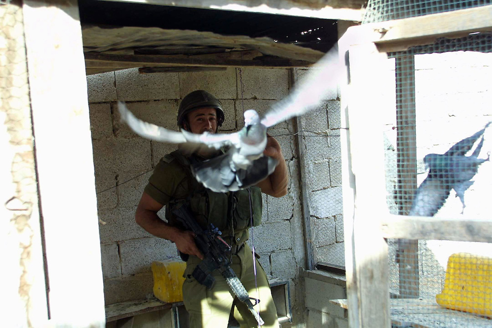 I.D.F discover a tunnel to smuggling weapon to Gaza strip.....A solder freeing pigeon from dovecote before the explosions **UK OUT**