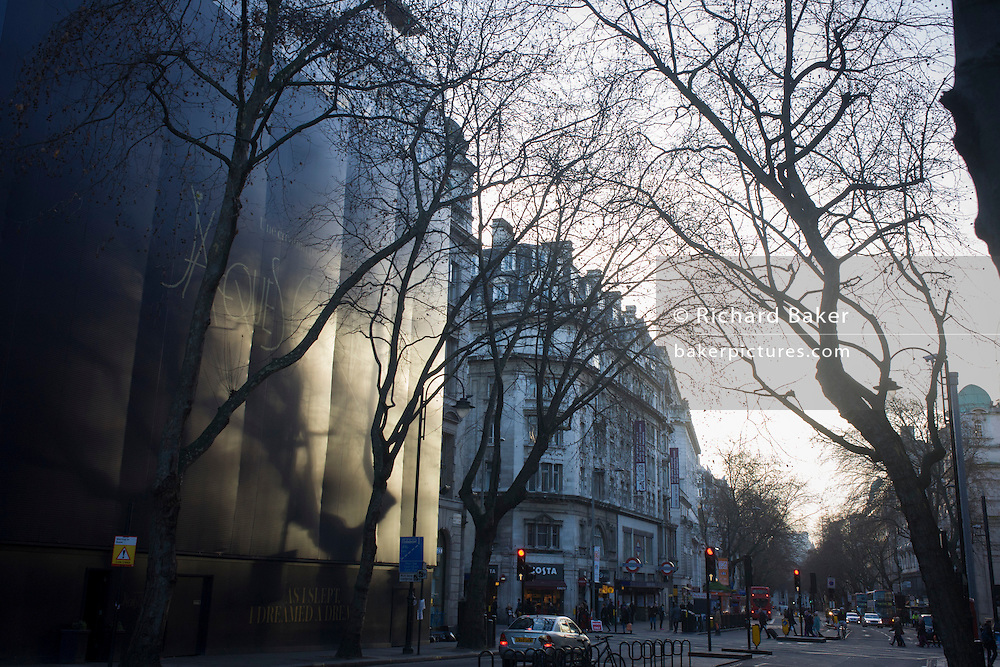 Winter trees and branches in London's Holborn.