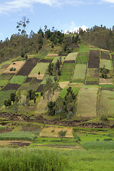 South America, Ecuador, Banos, hill with plowed fields