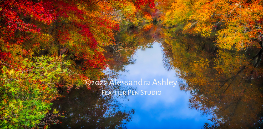 Still black water creek offers perfect reflection of brilliant fall foliage.  Little River Canyon State Park, Alabama, USA.