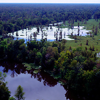 Louisana Swamp Lands& Cypress Trees