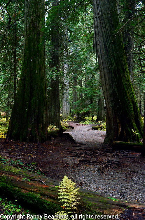 Ross Creek Cedars in the Kootenai National Forest. Northwest Montana