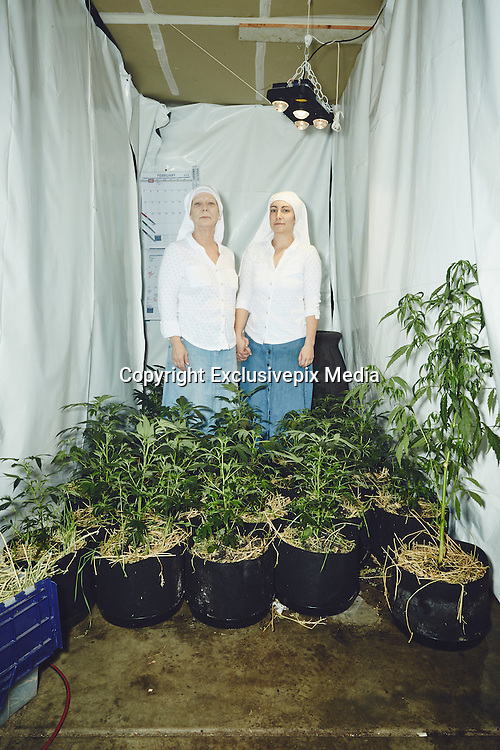 """EXCLUSIVE<br /> A DAY IN THE LIFE OF TWO FEMINIST, CANNABIS-GROWING NUNS<br /> <br /> They are exactly who they present themselves to be,"""" say photographers Shaughn Crawford and John DuBois of the Sister of the Valley two nuns who grow and sell cannabis products from their home in Merced, California.<br /> <br /> Sister Kate and younger apprentice Sister Darcy take great pride in their work, and they welcomed the photographers into the fray with generous and open spirits. DuBois describes the Sisters as """"self-ordained;"""" in other words, they are not members of the Catholic order but live within a holy world all their own.<br /> As deeply spiritual women with the intention to heal the sick, they harvest their marijuana plants according to the cycles and positions of the moon, and until recently, when their account was shut down, they sold their salves and remedies on Etsy. The process includes special rites and rituals, including the burning of sage, and every shipment is blessed with a prayer.<br /> The products they sell are medicinal do not make their clients """"high."""" With their concoctions, they treat anything from diaper rash to seizures. They are politically active and engaged with the community— they support Bernie Sanders and decry Donald Trump—and more than anything, they're on a mission to help people in pain.<br /> <br />  the tale of two complex, daring women who have turned their own personal brand of piety into a thriving business run by strong-minded women.<br /> ©Shaughn Crawford and John DuBois/ Exclusivepix Media"""