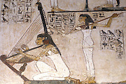 EGYPT, ANCIENT MONUMENTS, WEST BANK Thebes Necropolis; Tomb of Rekh-mi-re, 1410 BC; painted wall detail showing harpist
