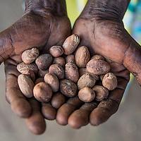 Shea nuts in Soroti, Uganda