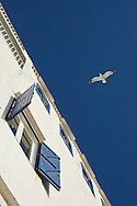 Essaouira with seagull and white and blue house