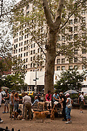 USA. New York -dog's park and run in Madison square park;  owner are meeting in the park / parc pour chiens dans le parc Madison;  rencontre des proprietaires de chiens