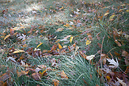Early morning dew on a carpet of autumn leaves