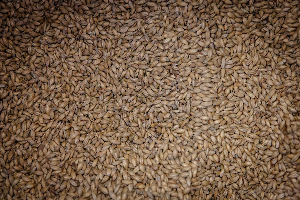 Barley at Distillerie Guillon in Louvois, France, January 24, 2015. Gary He/DRAMBOX MEDIA LIBRARY