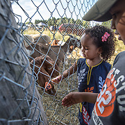"DUMFRIES, VA - SEP12: Jude Elsanousi, 4, and her brother Anas, 5, play with a goat at the Shah Farm in Dumfries, VA, September 12, 2016. The animals  will be slaughtered in honor of Eid al-Adha, the ""Feast of the Sacrifice"". (Photo by Evelyn Hockstein/For The Washington Post)"