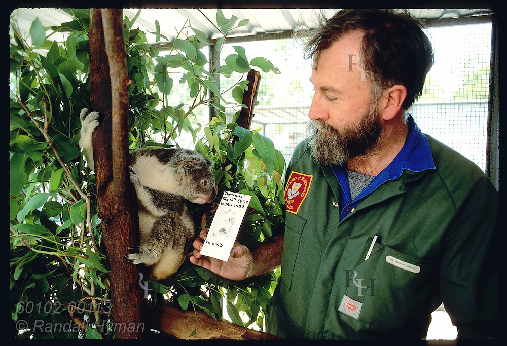 Zoologist Frank Carrick shows curious koala its fingerprint at Univrsty of Queensland; Brisbane Australia