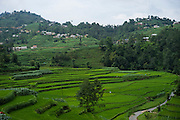 A general view of paddy fields in Rayale, Nepal on 1 July 2015. The roads to Rayale have just been cleared again after multiple landslides cut it off. The monsoon is causing mudslides and aftershocks still occasionally happen. The April 25th earthquake together with big aftershocks on April 26 and May 12 killed over 8000 people and injured over 19000 people, destroying over half a million houses. Photo by Suzanne Lee for SOS Children's Villages